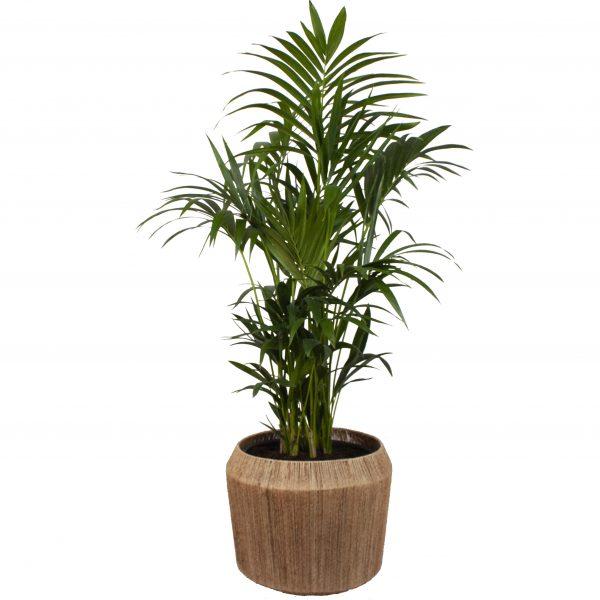 Pot & Plant
